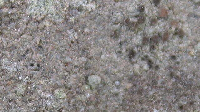Gyalidea japonica from Taiwan (ABL)