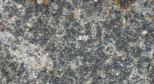 Lempholemma chalazanum image