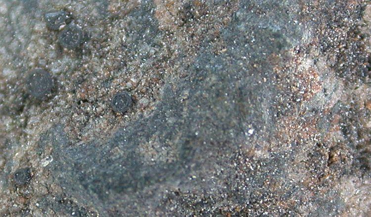 Porpidia crustulata from China, Yunnan